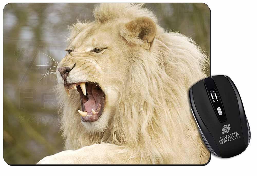 White lion animal roaring