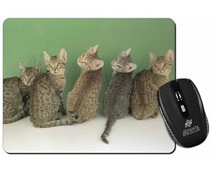 Click to see all products with these Ocicat Kittens.