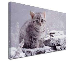 Silver Tabby Cat in Snow, AC-70