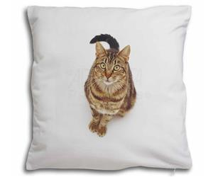 Brown Tabby Cat, AC-160