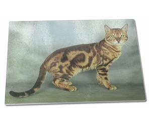 Bengal Gold Marble Cat, AC-89