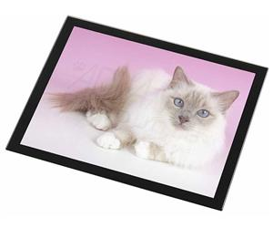 Lilac Birman Cat, AC-91