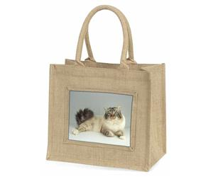 Tabby Birman Cat, AC-93