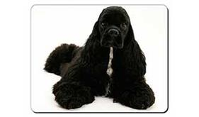 American Cocker Spaniel Dog, AD-ACS1