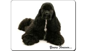 American Cocker Spaniel with Sentiment, AD-ACS2