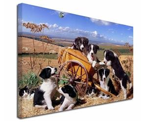 Click to see all products with these Border Collie Puppies