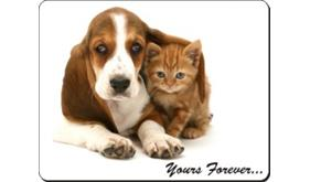 Basset Hound and Kitten with Sentiment, AD-BH2