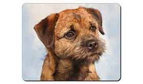 Border Terrier, AD-BT2