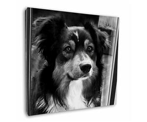 Click to see all products with this Border Collie