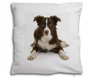Click to see all products with this Chocolate Border Collie.