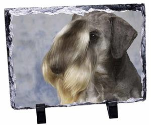Click image to see all products with this Cesky Terrier.