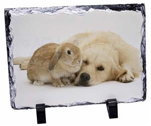 Golden Retriever and Rabbit, AD-GR52