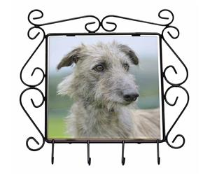 Rough Coated Lurcher, AD-LU6