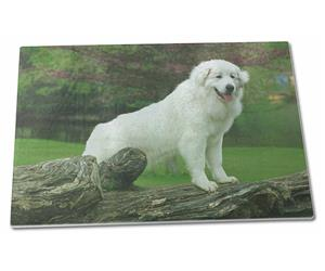 Pyrenean Mountain Dog, AD-PM1