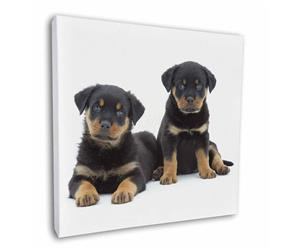 Clickl image to see all products with these Rottweiler Puppies.