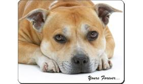 Staffordshire Bull Terrier with Sentiment, AD-SBT8
