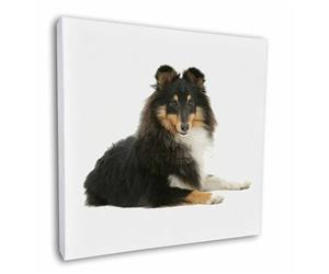Click image to see all products with this Tri-Colour Shetland Sheepdog.