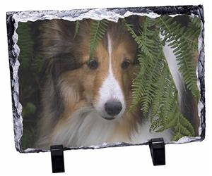 Click image to see all products with this Shetland Sheepdog.