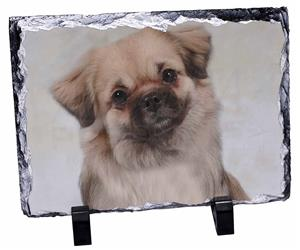 Click image to see all products with this Tibetan Spaniel.