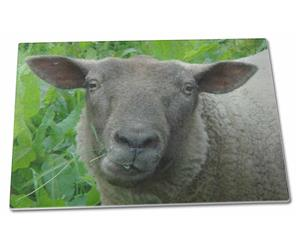 Click Image to See All the Different Sheep, Lambs and Products in this Section