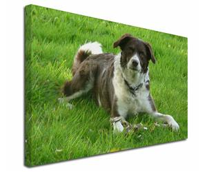 Click to see all products with this Liver and White border Collie.