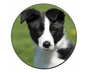 Click to see all products with this Border Collie Puppy