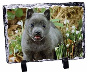 Click Image to See All the Different Products Available with this Schipperke