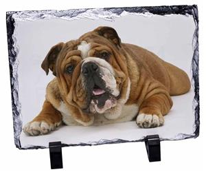 Click Image to See All the Many Different Bulldogs & All Different Products Available