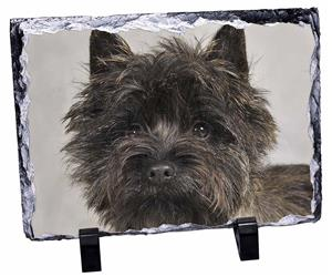 Click Image to See the Different Cairn Terrier Dogs & All Different Products Available
