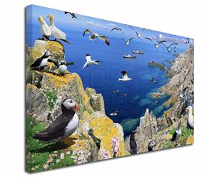 Click Image to See All the Sea Birds, Puffins Penguins and Albatros in this Section