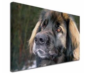 Click Image to See the Different Leonberger & All the Different Products Available