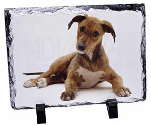 Click Image to See the Different Lurcher Dogs & All the Different Products Available