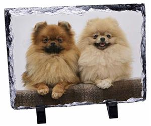 Click Image to See the Different Pomeranian Dogs & All the Different Products Available