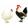 Realistic Life-Size Plush Cockerel Rooster Childrens Soft