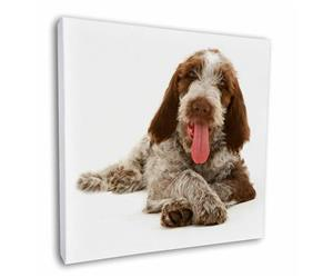 Click Image to See the Different Spinone Images & All the Different Products Available