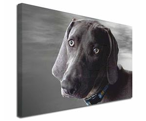 Click Image to See All the Different Products Available with this Weimaraner