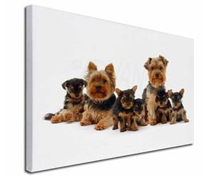 Click Image to See All the Many Different Yorkshire Terriers & All the Different Products Available