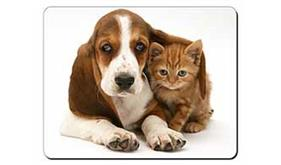 Basset Hound Dog and Cat, AD-BH1