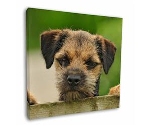 Border Terrier Puppy Dog, AD-BT5
