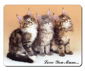 Maine Coon Kittens Mum Sentiment, AC-28lym