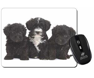 Click Image to See All the Different Products Available with these Yorkipoo
