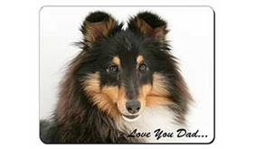 Tri-Col Sheltie Dog