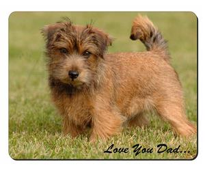 Norwich/Norfolk Terrier