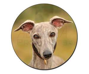 A Gorgeous Whippet Dog, AD-WH92