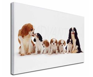 King Charles Spaniel Dogs, AD-SKC11