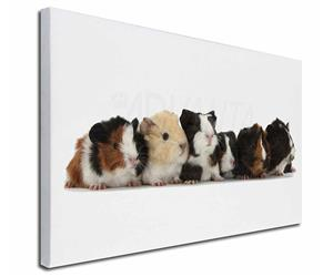 Baby Guinea Pigs, GIN-4