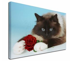 Birman Point Cat with Red Rose, AC-45R