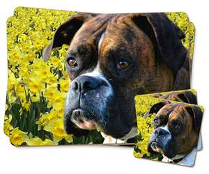 Boxer Dog with Daffodils, AD-B27DA