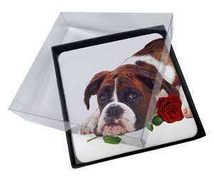 Boxer Dog with Red Rose, AD-B41R