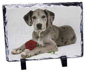 Great Dane with Red Rose AD-GD2R